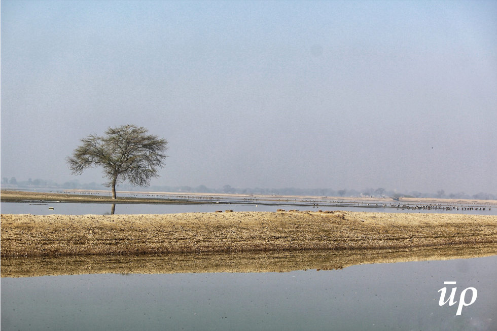 During winters mystic fog envelops the Chandlai and one can not look to the other edge of the expansive lake.