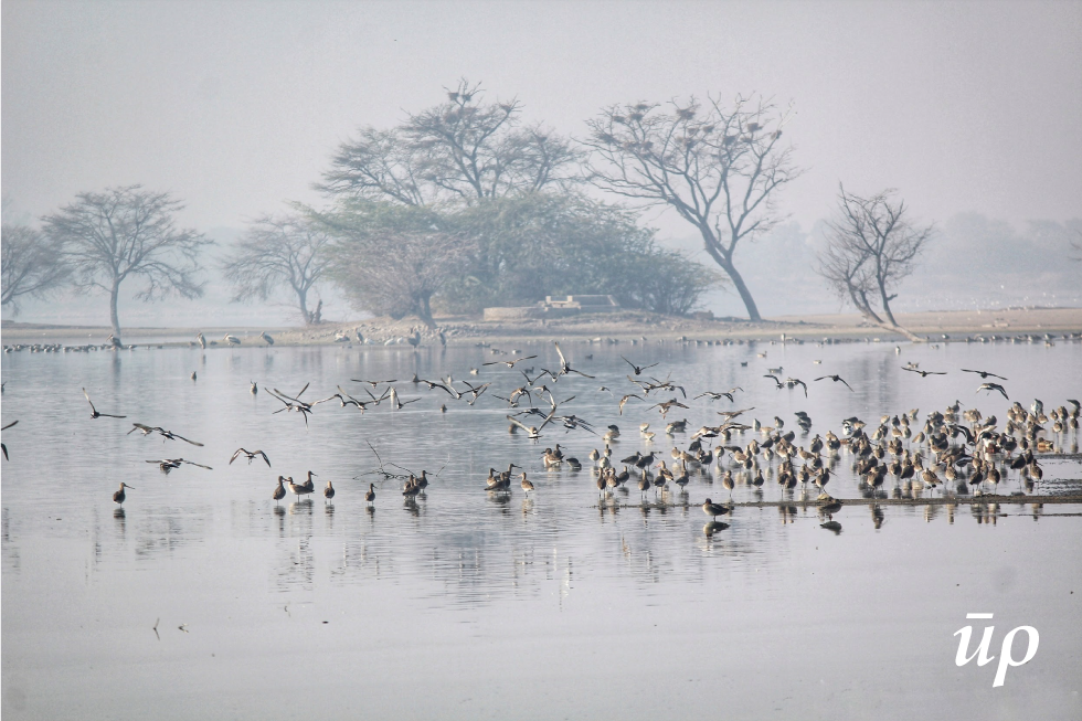 Chandlai attracts migratory birds to its pristine environs during the winter months of November-February.