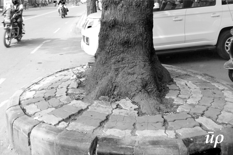 This photograph is the classic instance of the conundrum by municipal authorities while designing for the public realm. To add pavement around tree and allow the tree continue shading the street or to get rid of them.